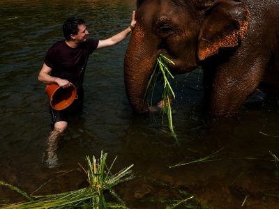 A visit to an elephant sanctuary in Thailand